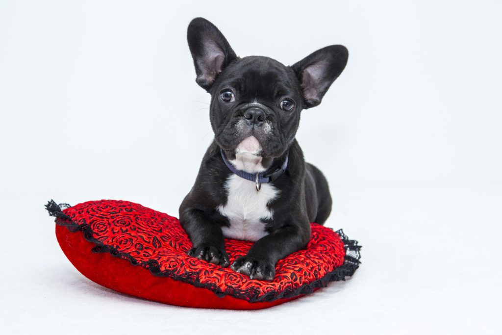Learn about perianal fistula at the RegionalVet blog.
